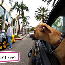 Video: California Dogs in Cars