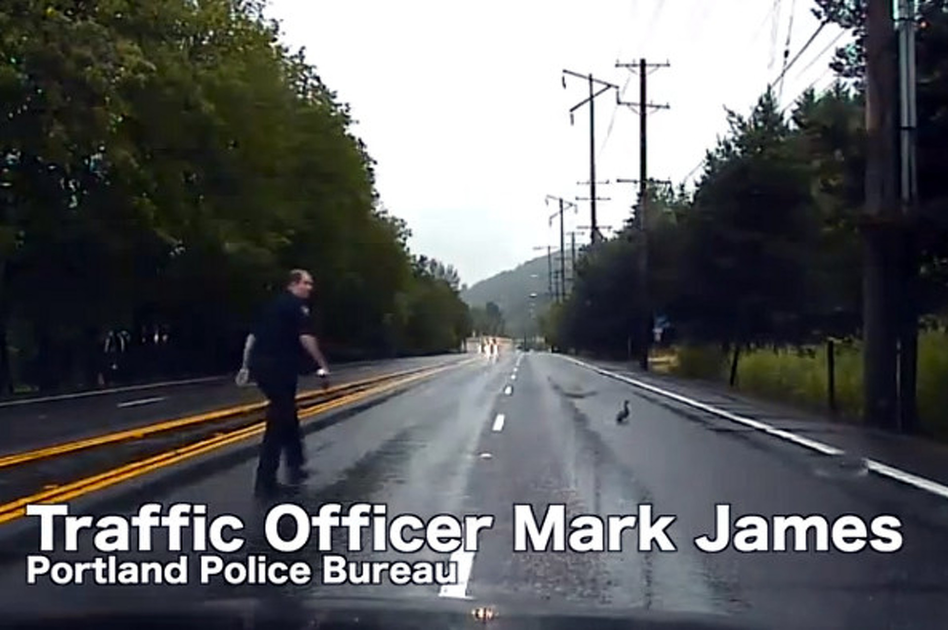 Video: Traffic Cop Makes Way For Ducklings