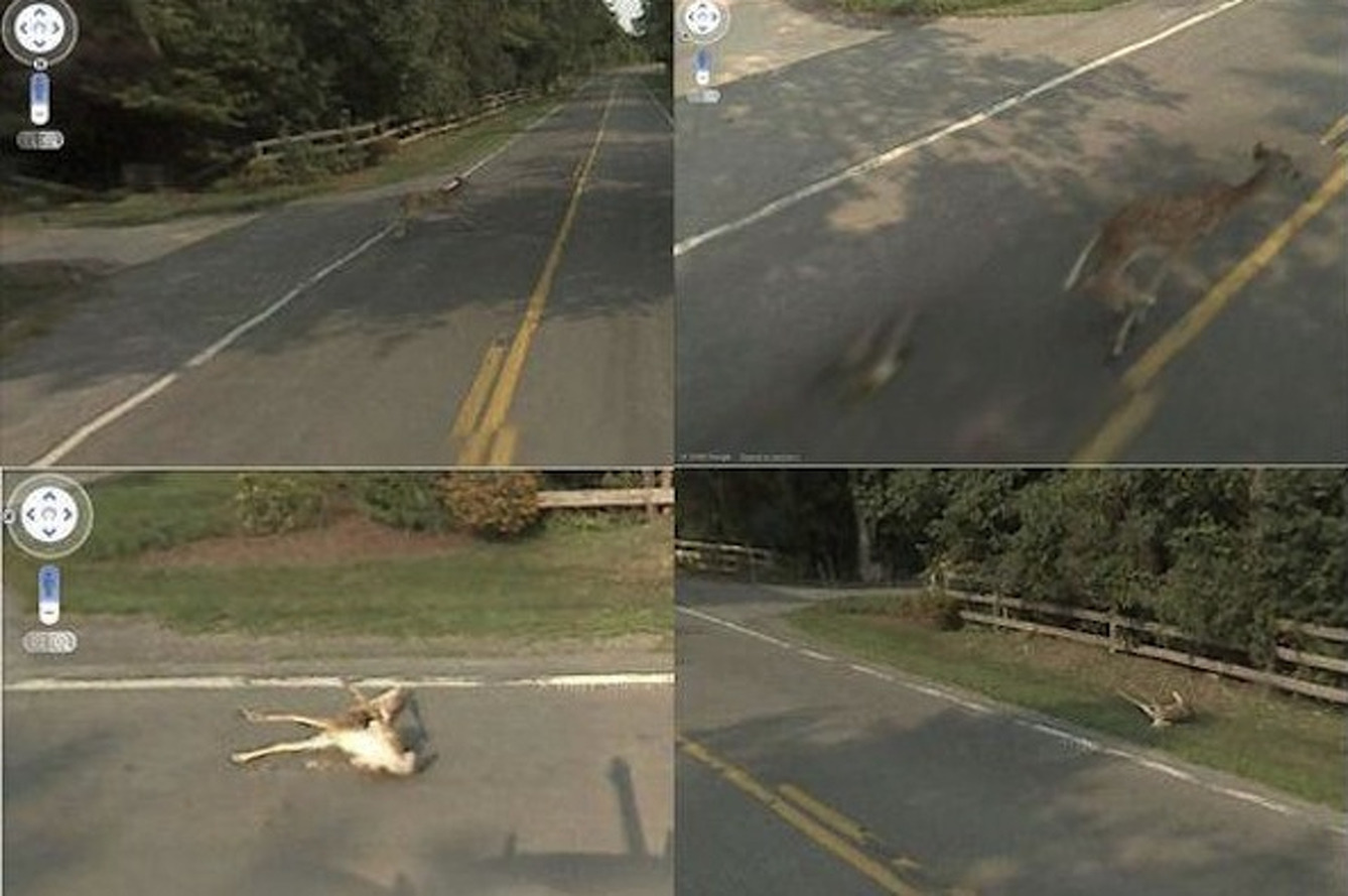 Why Is Google Street View Running Over Wild Animals?