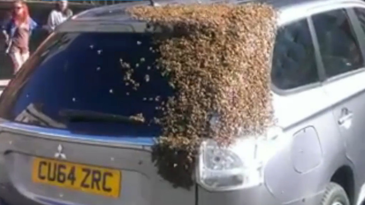 Mitsubishi Outlander swarmed by bees