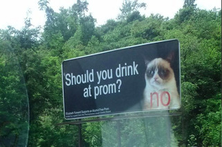 Grumpy Cat Doesn't Want You Drinking and Driving