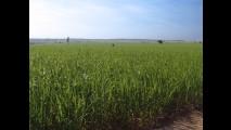 Incentivo às usinas não deve mudar preço do etanol; meta é exportar