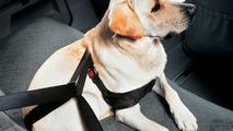 BMW dog safety harness