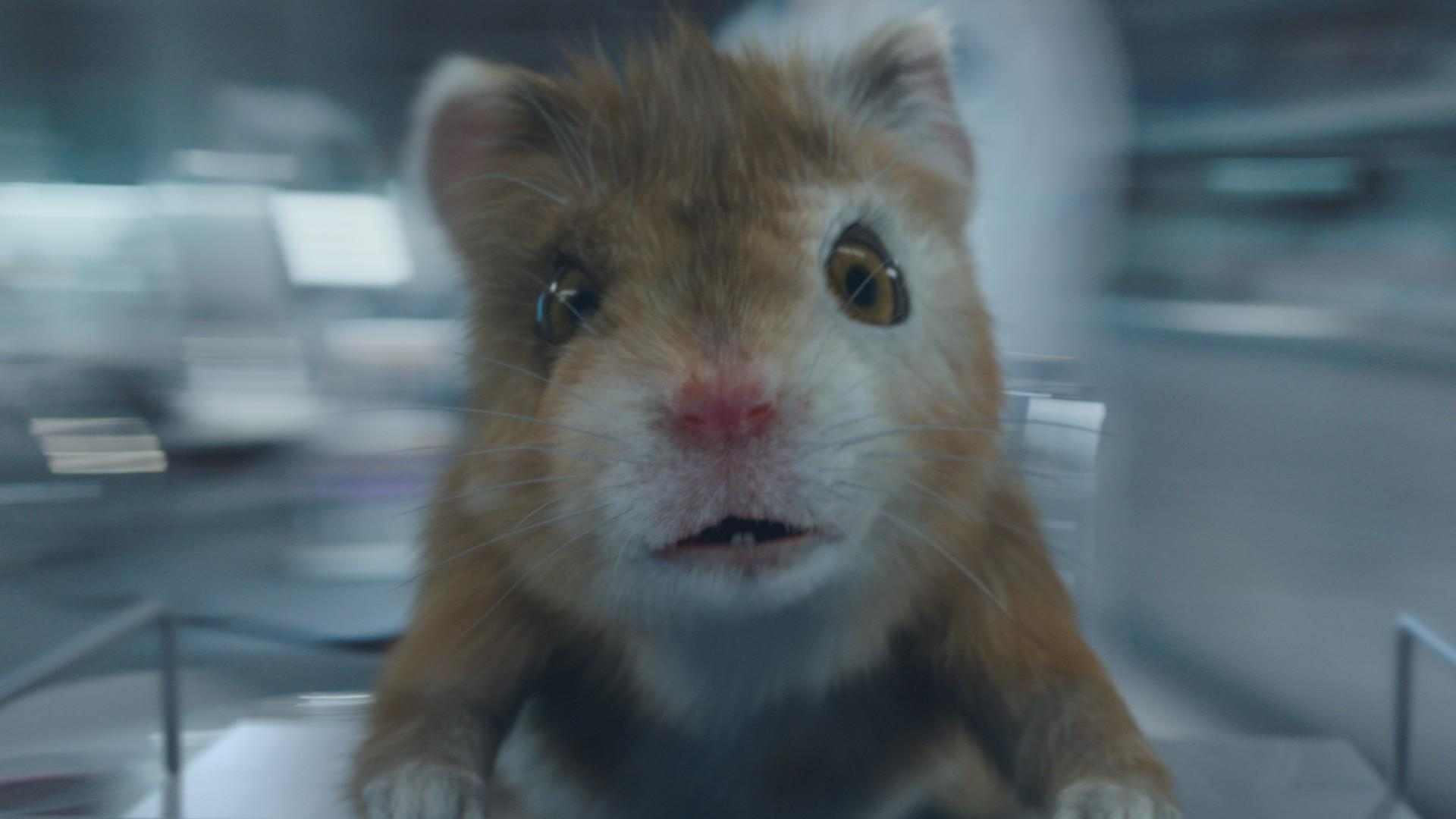 Kia Soul Commercial >> Kia's Hamsters Return With A Little One In Eighth Commercial
